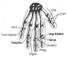 MSA Hand Diagram